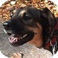 Adopt A Pet :: Boots - Hamilton, ON