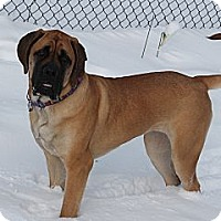 Adopt A Pet :: **Stella** - Rockaway, NJ