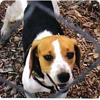 Adopt A Pet :: Kascy - Little River, SC