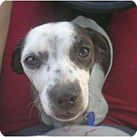Adopt A Pet :: Rachel - Long Beach, CA
