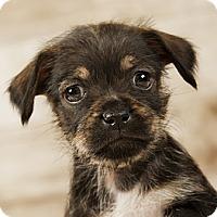 Adopt A Pet :: Misty - Wytheville, VA