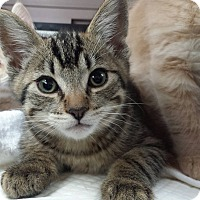 Adopt A Pet :: Walter - Irvine, CA