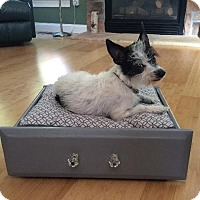 Adopt A Pet :: Pedro - Albion, RI