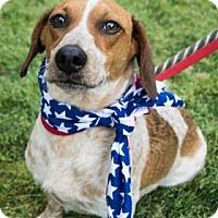 Adopt A Pet :: Willie - Suwanee, GA