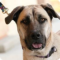 Adopt A Pet :: Bruce - Palmdale, CA