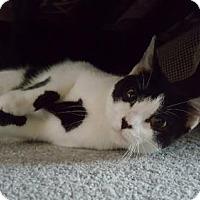 Adopt A Pet :: Tatiana - Oviedo, FL