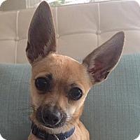 Adopt A Pet :: Farley - Surrey, BC