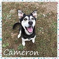 Husky Mix Dog for adoption in Unionville, Pennsylvania - Cameron