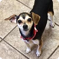 Adopt A Pet :: Unicorn 111171 - Joplin, MO