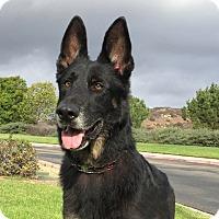 Adopt A Pet :: Doc - San Diego, CA