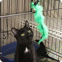 Adopt A Pet :: Chip - Warwick, RI
