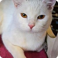 Adopt A Pet :: Deuce - Michigan City, IN