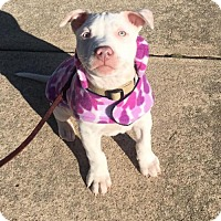 Adopt A Pet :: Rayney - Catasauqua, PA
