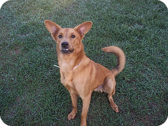German Shepherd Dog Mix Dog for adoption in Tampa, Florida - Max