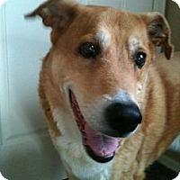 Adopt A Pet :: Meeko - Phoenix, AZ