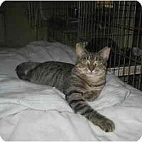 Adopt A Pet :: Edee-Zeda - Lombard, IL