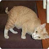 Adopt A Pet :: Tres - Reston, VA