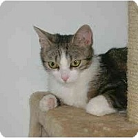 Adopt A Pet :: Princess - Etobicoke, ON