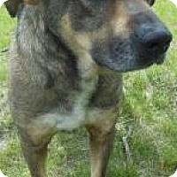 Adopt A Pet :: Charlie - Gary, IN