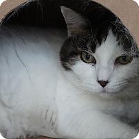 Adopt A Pet :: Emmy - Elyria, OH