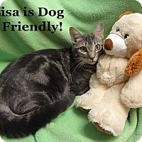 Adopt A Pet :: Lisa - Bentonville, AR