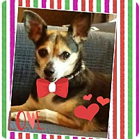 Adopt A Pet :: BillieJean - Homewood, AL