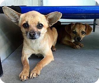 Sharon Connecticut Dog Rescue