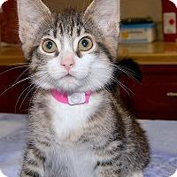 Adopt A Pet :: Diamond - Medina, OH