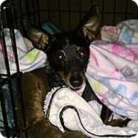 Adopt A Pet :: Opal - Columbus, OH