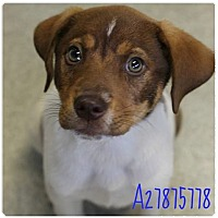 Adopt A Pet :: Parker Adoption Pending - East Hartford, CT