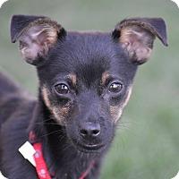 Adopt A Pet :: Spud - Meridian, ID