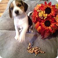 Adopt A Pet :: Jane - Marlton, NJ