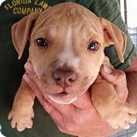 Adopt A Pet :: Trooper - Gainesville, FL