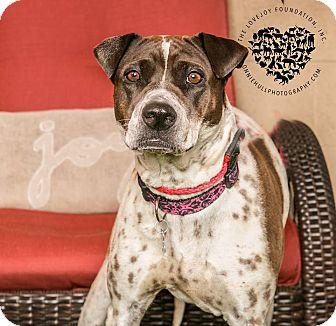 Hound (Unknown Type)/Coonhound (Unknown Type) Mix Dog for adoption in Inglewood, California - Jade