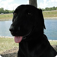 Adopt A Pet :: Angus - Lewisville, IN