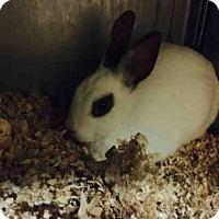 Adopt A Pet :: ASHLEY - San Martin, CA