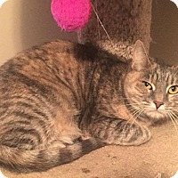 Adopt A Pet :: Morgana - Hazlet, NJ