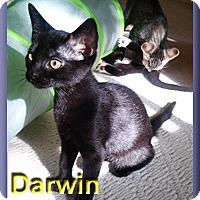 Adopt A Pet :: Darwin - Aldie, VA