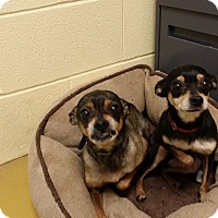 Adopt A Pet :: Lady & larry - Berlin, CT