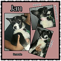 Adopt A Pet :: Jan - Richmond, CA