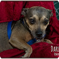 Adopt A Pet :: Darlin - Fallbrook, CA