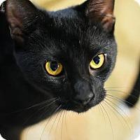 Adopt A Pet :: Domo - Aiken, SC