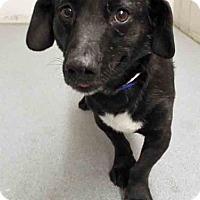 Adopt A Pet :: Pup - Channahon, IL