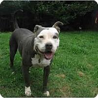 Adopt A Pet :: Gabby - Blanchard, OK