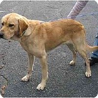 Adopt A Pet :: Bodie - Cumming, GA