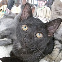 Adopt A Pet :: Layla - Richland, MI