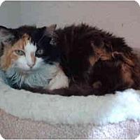Adopt A Pet :: Chelsea - El Cajon, CA