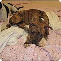Adopt A Pet :: Stark - Reisterstown, MD