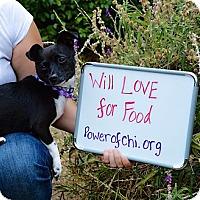 Adopt A Pet :: Lulu - Oakland, CA