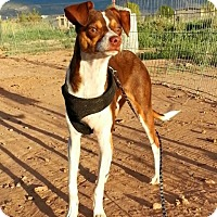 Adopt A Pet :: Kingston - Alamogordo, NM